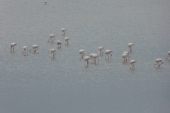 More flamingos at El Rocio